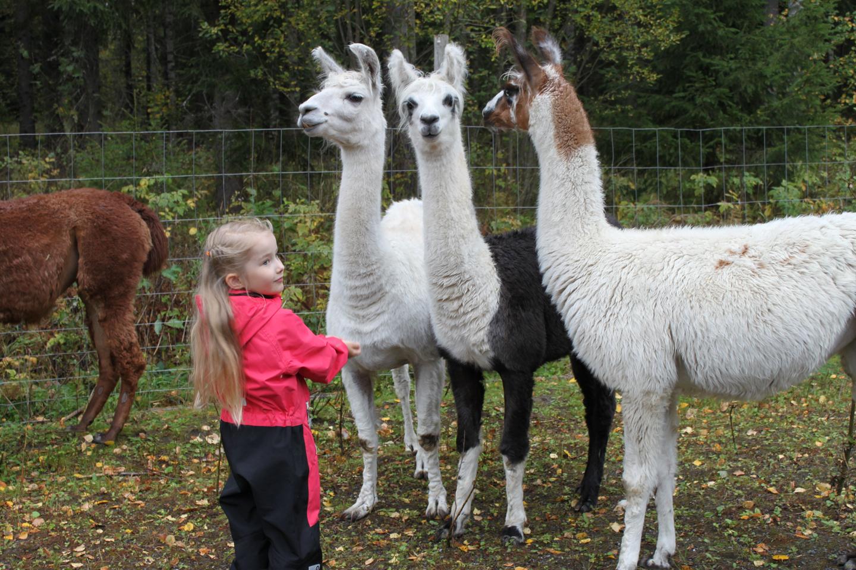 Lapsi ja laamat Villa Alpacassa