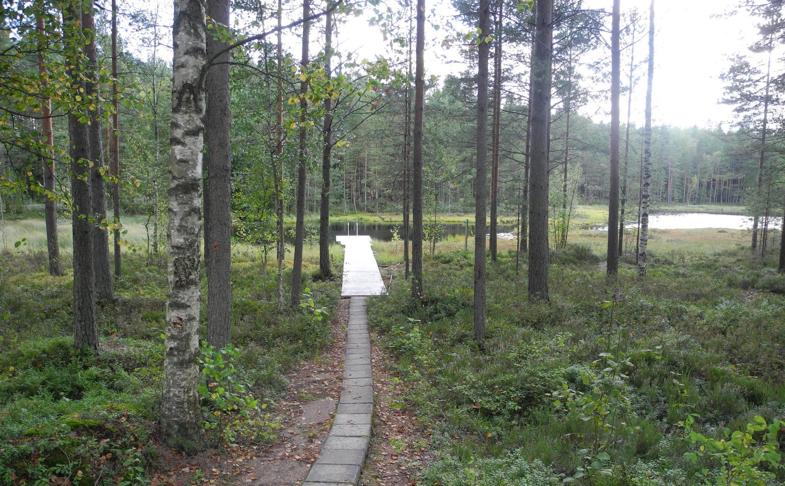 Koukkujärven majalla on uintimahdollisuus metsälammessa suoraan saunan laiturilta.