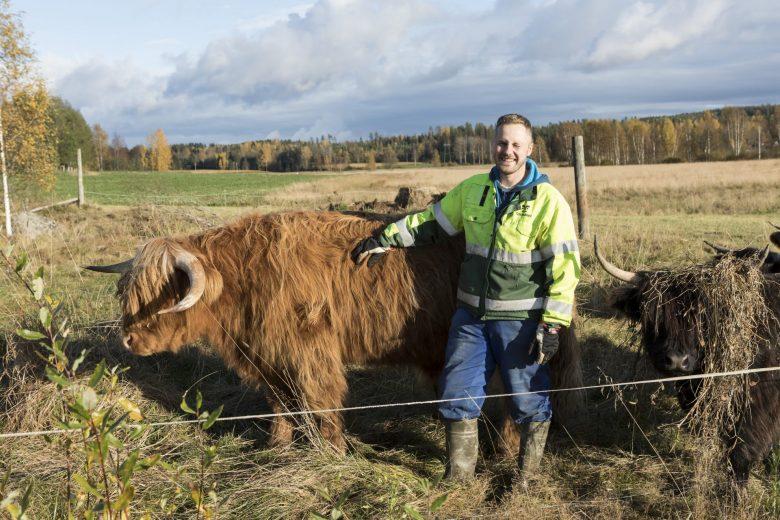 Honkaniemen tilan isäntä karjan kanssa