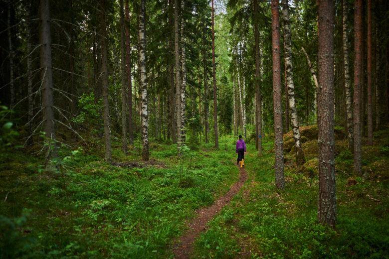 Retkeilijä kävelee värikkäissä vaatteissaan polulla keskelle sankkaa vihreää metsää.