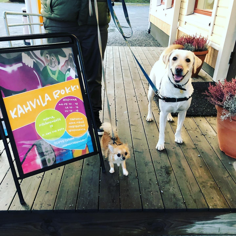 Kaksi koiraa Kahvila Rokin mainoskyltin edessä kahvilan terassilla.