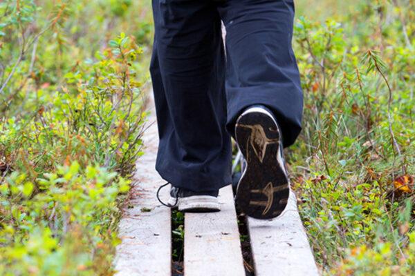 Mies kävelee pitkospuilla, joita ympäröivät mustikanvarvut.